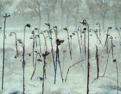 Schilderij zonnebloemen in de sneeuw van isabella werkhoven